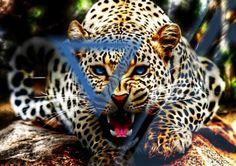 nature roar #triangle
