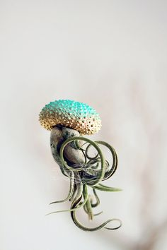 The original Jellyfish Air Plants™  Air plants masquerading as jellyfish!    BRAND NEW  Turquoise-Gold ombre for the holidays! Perfect as alternative