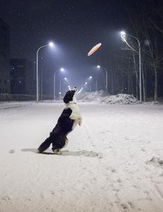 """Rain...sun...snow...they love their frisbees!! I had a border and she would play """"frizzie"""" all day any day!!"""
