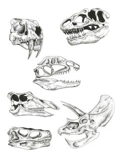 Dinosaur skulls dotwork