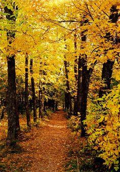 35PHOTO - Игорь - ...Осень... Арзамас