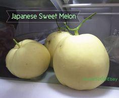 Seeds for sale!  ✿RARE HEIRLOOM JAPANESE SWEET MELON/ HONEYDEW /MUSKMELON SEEDS 15+ GROW FAST Japanese Sweet, Seeds For Sale, Honeydew, Fruits And Vegetables, Vegetable Garden, Farmer, Crisp, Dan, Food