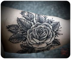 rose by david hale #tattoos  I'd like a rose like this, without the leaves, on a stem