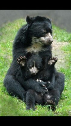 How adorable momma and baby