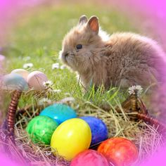 #HappyEaster #EasterBunny #Bunny #Cute #PhotoTangler www.phototangler.com