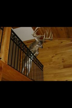 Best deer mount ever! I'm totally gonna do this with my deer!!!!
