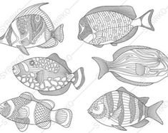 Tropical Fishes Coloring Pages Animal Book For Adults Instant Download Print