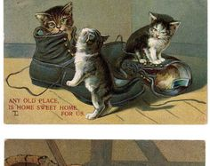 3 Vintage CAT Postcards 2 German 1909 & 1923 Adorable Artist Drawn Embossed Antique Sweet Young KITTENS Play In Shoes With Beetle Bug Pillow