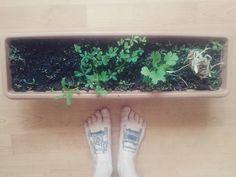 #whatyouplantyouwilleat #gardener #iamgardener #sixweekslater #herbal #parsley #sage #rosemary #and #thyme #maysunshine #prague #tattooonfoot #landrover #defender #landroverdefendertattoo #tattoo #cartattoo #lovemytattoo #landrovers #land #rover #landroverdefender by land_rover_defender_withlove #whatyouplantyouwilleat #gardener #iamgardener #sixweekslater #herbal #parsley #sage #rosemary #and #thyme #maysunshine #prague #tattooonfoot #landrover #defender #landroverdefendertattoo #tattoo…