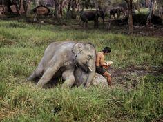 beautiful ~ Steve McCurry Photography