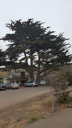 Huge tree next to Spooner house