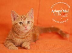 August is available to adopt from CoronadoCARES, http://www.coronadocares.org