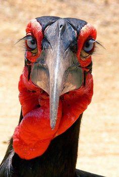 40 aves de bicos estranhos                                                                                                                                                                                 Mais