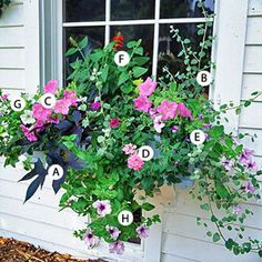 Plants: A. Sweet potato vine (Ipomoea batatas 'Blackie') -- 1 B. Licorice plant (Helichrysum petiolare) -- 1 C. Petunia 'Carpet Lilac' -- 2 D. Verbena 'Aztec Pink Magic' -- 1 E. Wishbone flower (Torenia 'Summer Wave Blue') -- 1 F. Salvia 'Lady in Red' -- 1 G. Petunia 'Ramblin White' -- 1 H. Petunia 'Pink Daddy' -- 1