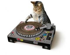 CAT SCRATCHING DJ DECKSTurn your beloved feline into a superstar DJ with this slick turntable scratching pad!Cardboard, mixing deck-shaped cat scratching mat – with spinnable deck and poseable tone arm. Objet Wtf, Dj Pult, Cat Playhouse, Dj Decks, Gatos Cat, Gadgets, Cat Scratching Post, Cat Scratcher, Cute Kittens