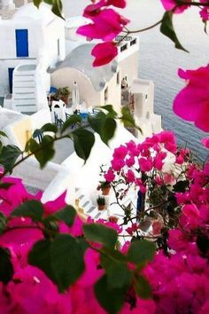 Santorini is a must on any bucket list. Bougainvillea in Oia, Santorini , Greece Bougainvillea, Places Around The World, Oh The Places You'll Go, Places To Travel, Mykonos, Oia Santorini, Santorini Island, Santorini Travel, Beautiful World