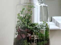 How to Choose Terrarium Plants and Build Their Home - See more at: http://www.hgtvgardens.com/terrarium/how-to-choose-terrarium-plants-and-build-their-home#sthash.chNY9rBq.dpuf