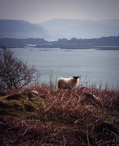 @Lorna_Decorex sent this stunning view on the Isle of Mull.