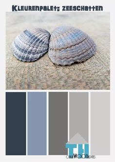 kleurenpalet  zeeschatten
