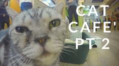 South Korea Cat Cafe' II (The Reckoning) | Impossibilities - Magic, Mindreading and Mayhem!