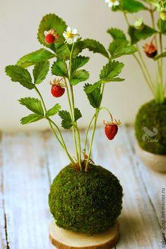 Bonsai kokedama interior with strawberries String Garden, Succulents Garden, Garden Plants, House Plants, Planting Flowers, Indoor Garden, Indoor Plants, Bonsai Soil, Wild Strawberries