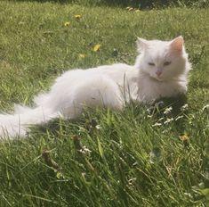 Noirheid — Luna is enjoying the sun ☀️🌸🐥 Pretty Animals, Cute Little Animals, Pretty Cats, Baby Animals, I Love Cats, Cute Cats, Cat Aesthetic, Aesthetic Green, Cute Creatures
