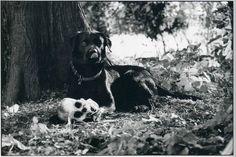 Ginger mood ... - Ironic pictures of the legendary Elliott Erwitt