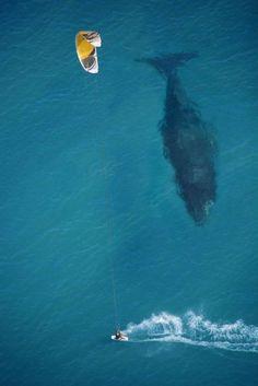 哇喔!與鯨同遊!
