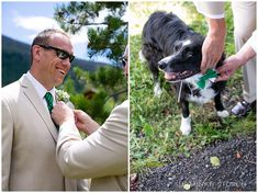 two images---one of a groom getting ready and one of a dog getting a bow tie put on  #weddingdog #weddingstyle #greenwedding #mountainwedding