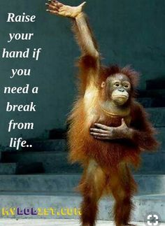 Quotes for Fun QUOTATION - Image : As the quote says - Description Funny Quotes - Funny PHOTOS - Raise your hand if you need a break from life. Find out Funny Good Morning Quotes, Dog Quotes Funny, Funny Animal Memes, Sarcastic Quotes, Really Funny Quotes, Thursday Humor, Stress Quotes, Haha Funny, Funny Humor