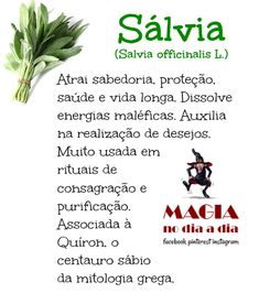 Magia no Dia a Dia: A Magia da Sálvia Wicca, Magick, Witchcraft, A Kind Of Magic, Nail Swag, Plant Health, Healing Herbs, My Secret Garden, Spirit Guides
