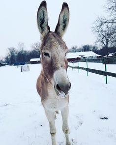 BLM donkey Animal Protection, The Donkey, Donkeys, Animal Welfare, Animal Rights, Animal Kingdom, Animal Rescue, Equestrian, Wildlife