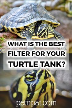 What Is The Best Filter For Your Turtle Tank?  #turtle #animals #pets #tank #aquarium Animals For Kids, Animals And Pets, Funny Animals, Farm Animals, Animal Quotes, Animal Memes, Turtle Tank Filters, Pet Turtle Care, Pet Warehouse