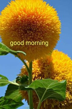 Good Morning Flowers Gif, Good Morning Gif Images, Good Morning Beautiful Pictures, Good Morning Nature, Good Morning Images Download, Happy Morning, Good Morning Messages, Good Morning Greetings, Good Morning Good Night