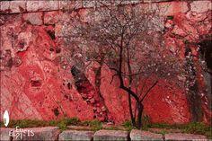 Yes, it's finally here! ;) - - © Black jack Greek #spring #almond #Eleusis2021 #EUphoria #ECoC2021 #Eleusis #Elefsina #Ελευσίνα #Elefsis #Eleusinian #Attica #WestAttica #Hellas #Greece #Greek #CreativeEurope #Europe #European #EuropeanCapitalOfCulture2021 #EuropeanCapitalOfCulture #ECoC #archaeological #industrial #beauty #colour #color #artiscool #art #culture