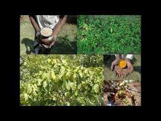 Medicinal Rice P5I Formulations for Melianthus Excess: Pankaj Oudhias M...