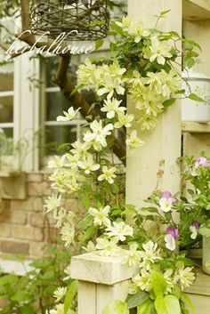 my little garden: クレマチス雪の舞 Green Flowers, White Flowers, Small Garden Plans, White Clematis, Love Garden, Foliage Plants, White Gardens, Garden Styles, Garden Planning