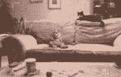 The human sofa cat dance. Gif Bin is your daily source for funny gifs, reaction gifs and funny animated pictures! Large collection of the best gifs. Fancy Cats, Cute Cats, Cat Couch, Creepy Gif, Jellicle Cats, Funny Animals, Cute Animals, Creeped Out, Dancing Cat