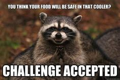 Funny pictures about Evil plotting raccoon. Oh, and cool pics about Evil plotting raccoon. Also, Evil plotting raccoon photos. Funny Shit, The Funny, Funny Memes, Funny Stuff, Funny Captions, Funny Things, Daily Funny, Funny Quotes, Videos Funny