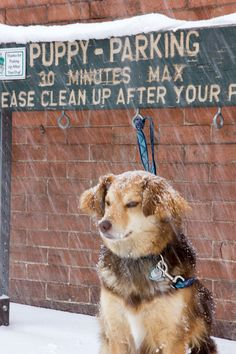 Telluride received 17 inches between March 19 and 20th. Great spring skiing conditions. Local pup, Remmy, sits outside of The Last Dollar Saloon on Sunday. - shared by http://www.myskiresort.com