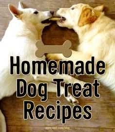 Home Dog Treat Recipes - Rent.com Blog  #pets #dogs #treats