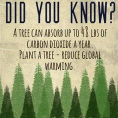 Did you know? A tree can absorb up to 48lbs of carbon dioxide a year. Plant a tree - reduce global warming.