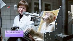 Four rhesus macaques are being trained to operate spacecraft controls in preparation for their possible journey into space next year.