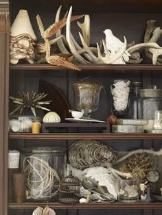 Antlers, branches & birds. Oh my! - beautiful for a family room