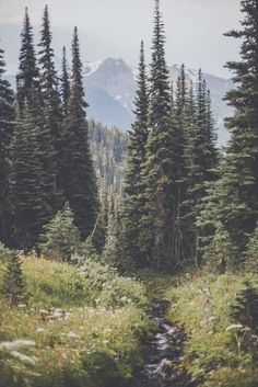I absolutely love nature and the outdoors. Going to a trail or forest just brings out the best in me. To be away from the business of civilization and just relax and appreciate the little things keeps me grounded.