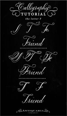 Antiquaria Calligraphy Tutorial The Capital Letter F