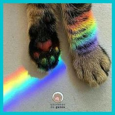 Patinhas!!  - www.universodegatos.com  ⠀⠀⠀⠀⠀⠀⠀⠀⠀⠀⠀⠀⠀⠀⠀⠀⠀⠀⠀⠀⠀⠀⠀⠀⠀⠀⠀⠀⠀⠀⠀⠀⠀⠀⠀⠀⠀⠀⠀⠀⠀⠀⠀⠀⠀⠀⠀⠀⠀⠀⠀⠀⠀⠀⠀⠀⠀⠀⠀⠀⠀⠀⠀⠀⠀⠀⠀⠀  #universodegatos #catsofinstagram #ilovemycat #instagramcats #nature #catoftheday #lovecats #lovekittens #adorable #catlover #instacat #gatos #gato #gatosdeinstagram #catlovers #cats - Credits for: @euqueroumnome