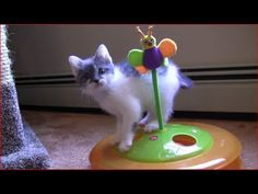A totally cute kitten minute.