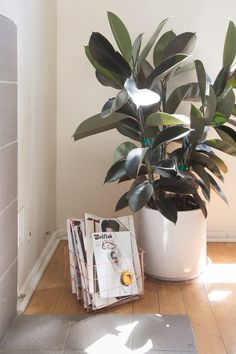 Indoor plants are a vibrant source of beauty in your home's otherwise inanimate landscape. And keeping them healthy and happy is a quiet source of joy for many people. But the opposite is also true: Struggling houseplants not only drag down your space's appearance, but they also bring us down too. Here are some common pitfalls we all face when it comes to caring for our plants.