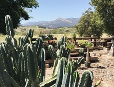 For decades Ojai, a kind of West Coast Shangri-La, has been a draw for LA locals who wanted a quick wellness fix and an easy escape from the citys bustle.